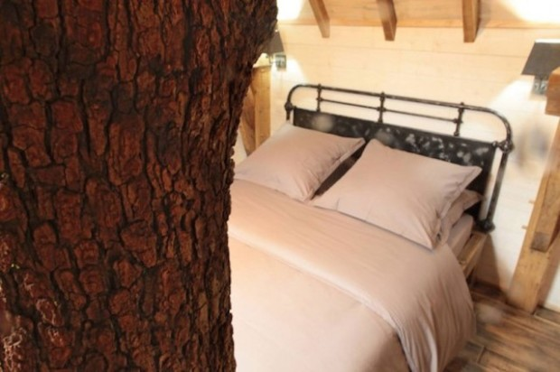 The-Coolest-Tree-House-4