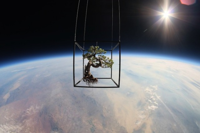 Plants-in-Stratosphere1