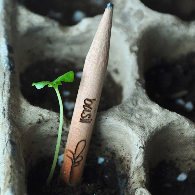 Sprout-A-Pencil-That-Grows-13