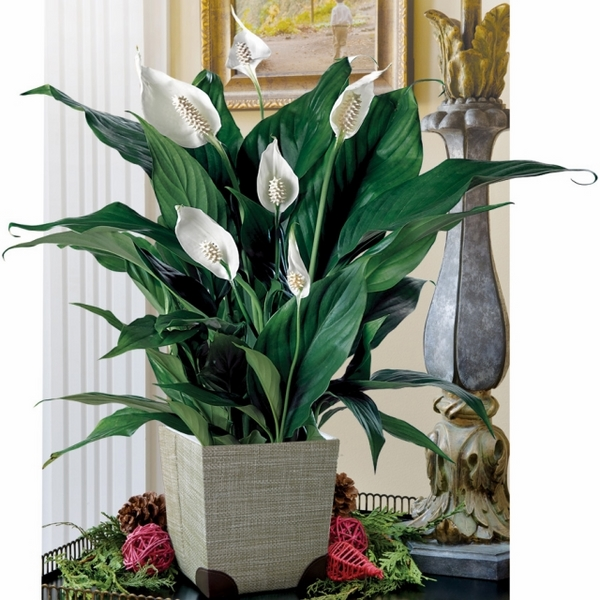 benefits-of-houseplants-ideas-improve-microclimate-home