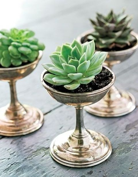 how-to-decorate-with-succulents-examples-13