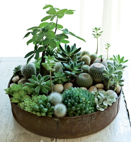how-to-decorate-with-succulents-examples-14