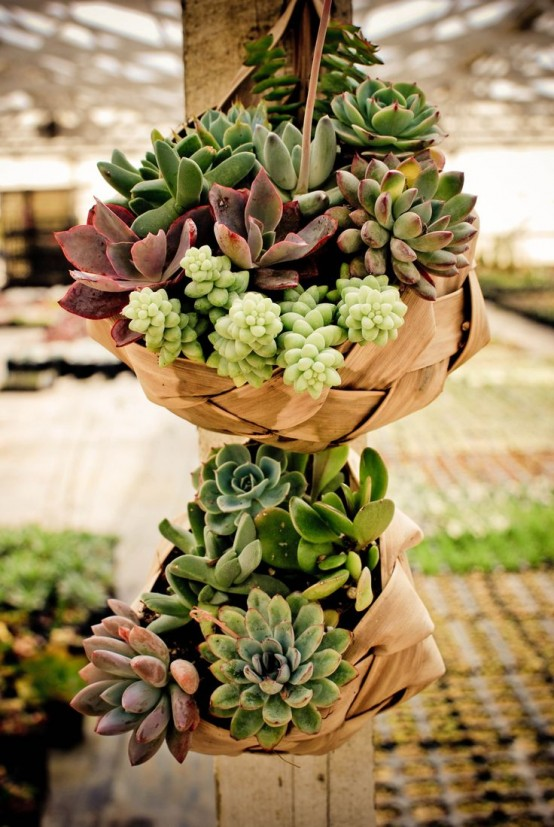 how-to-decorate-with-succulents-examples-15-554x827