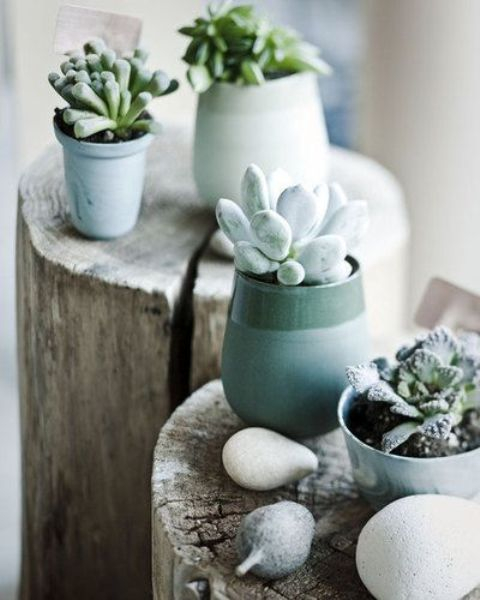 how-to-decorate-with-succulents-examples-19
