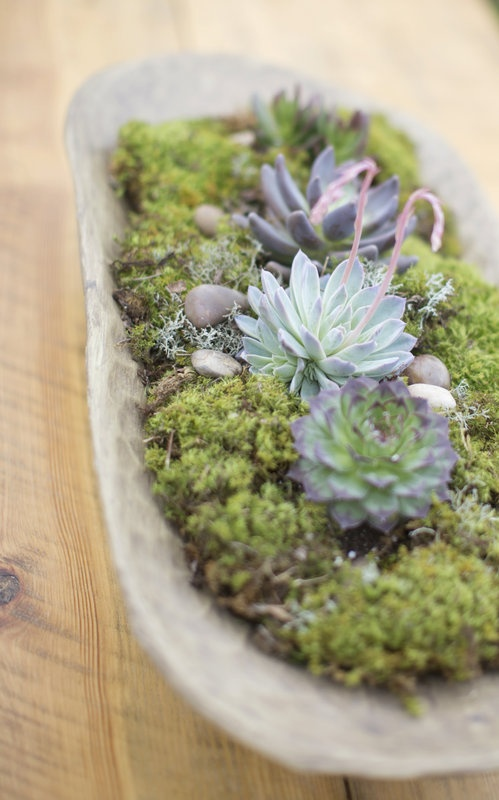 how-to-decorate-with-succulents-examples-24