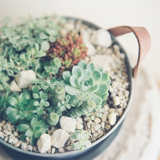 how-to-decorate-with-succulents-examples-26-554x554