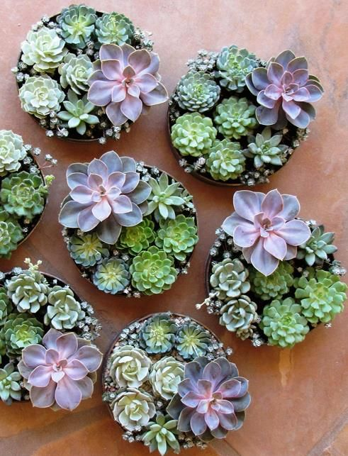 how-to-decorate-with-succulents-examples-4