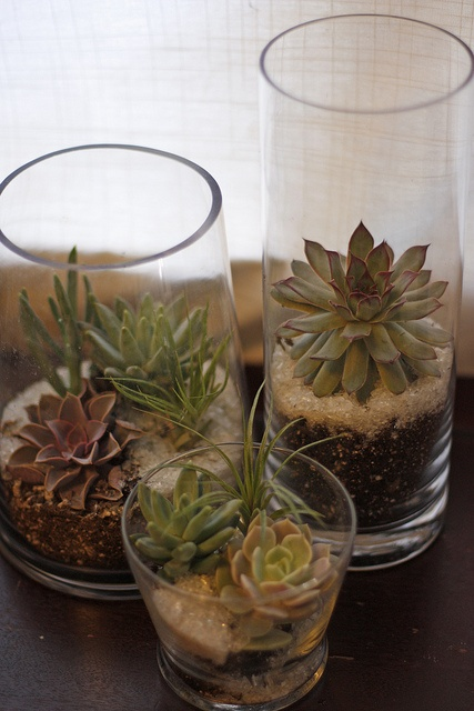 how-to-decorate-with-succulents-examples-5