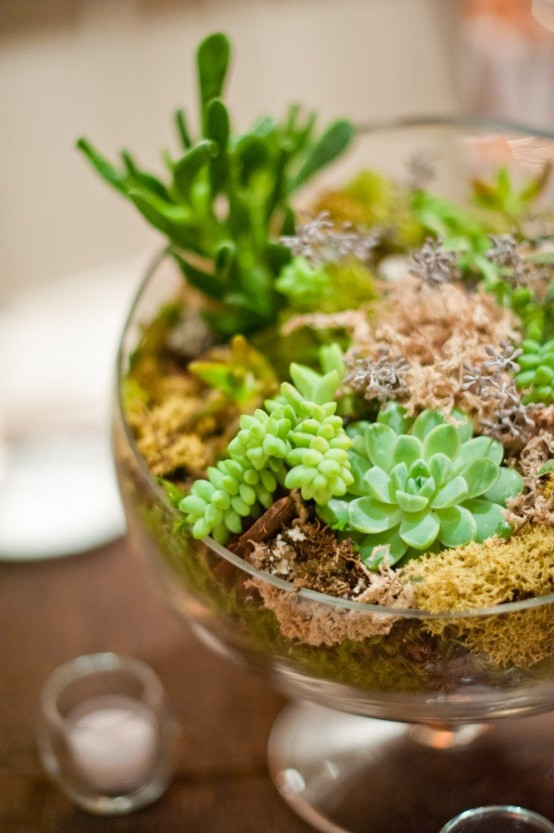 how-to-decorate-with-succulents-examples-8-554x833