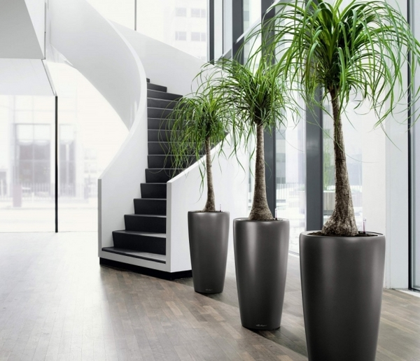 indoor-plants-benefits-awesome-modern-plant-containers