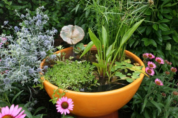Ceramic-pot-water-garden-balcony-design-ideas-quick-guide-fresh-flowers