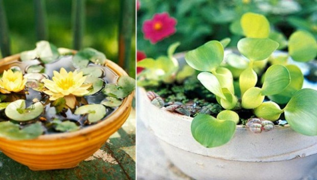 balcony-mini-pond-ideas-ceramic-pots-water-lily-planting-tips