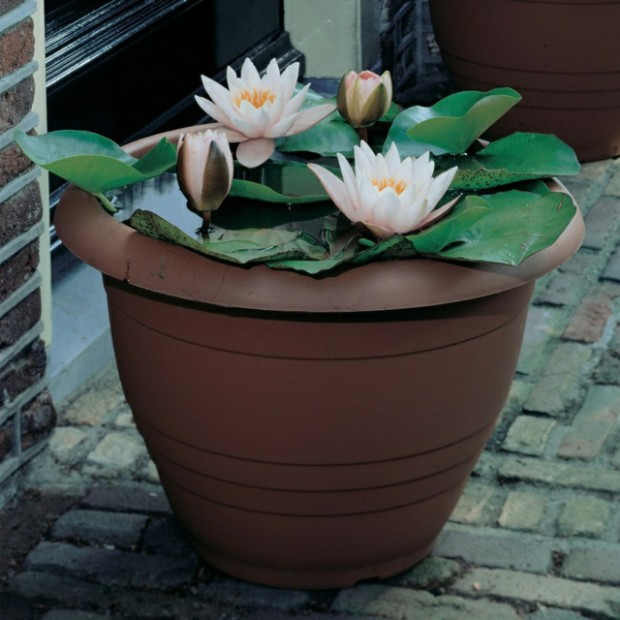 water-lily-ceramic-flower-pot-Water-Garden-design-Japanese-style