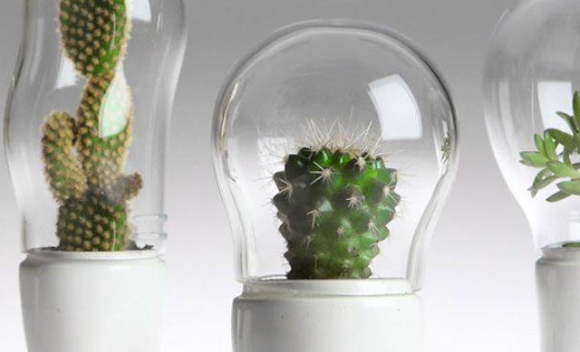 Funny-Creative-Terrariums-2