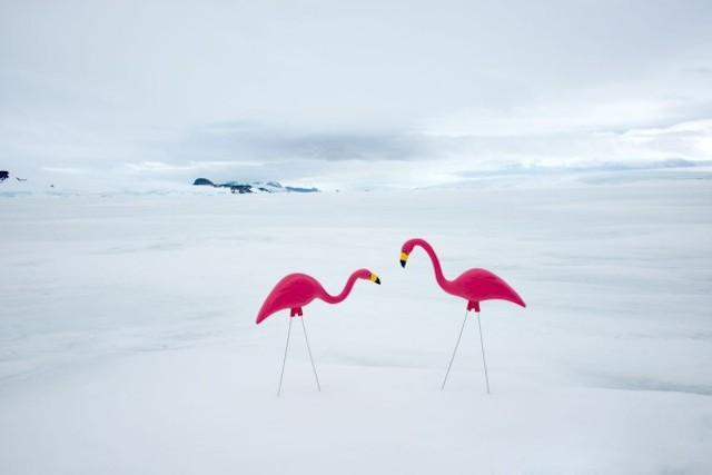 Unexpected-Antartica-Photography-by-Gray-Malin-3