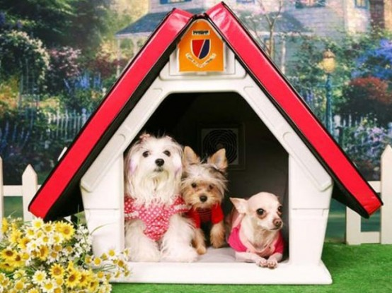 awesome-creative-pet-homes-for-any-type-of-interior-19-554x415