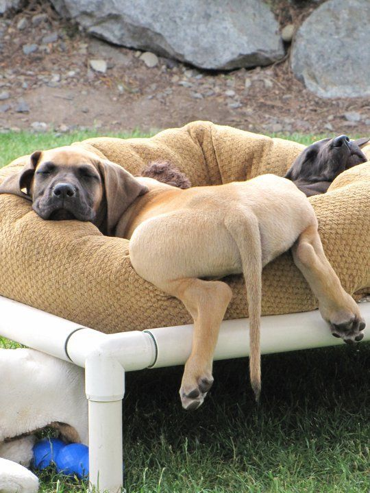 awesome-dog-beds-for-indoors-and-outdoors-17