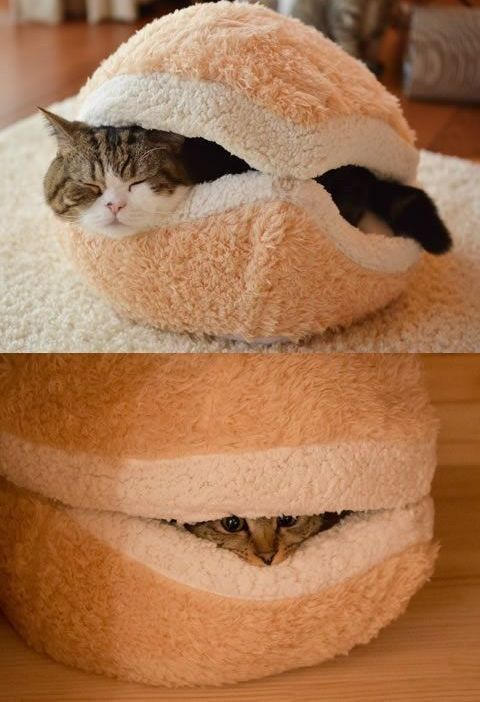 creative-and-cozy-cat-beds-1
