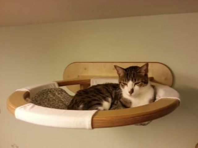 creative-and-cozy-cat-beds-11
