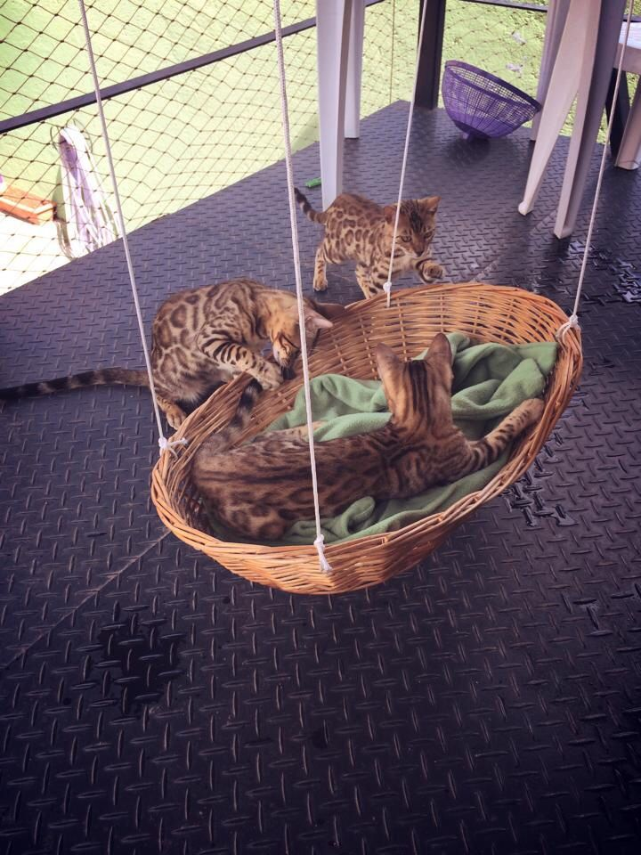 creative-and-cozy-cat-beds-15