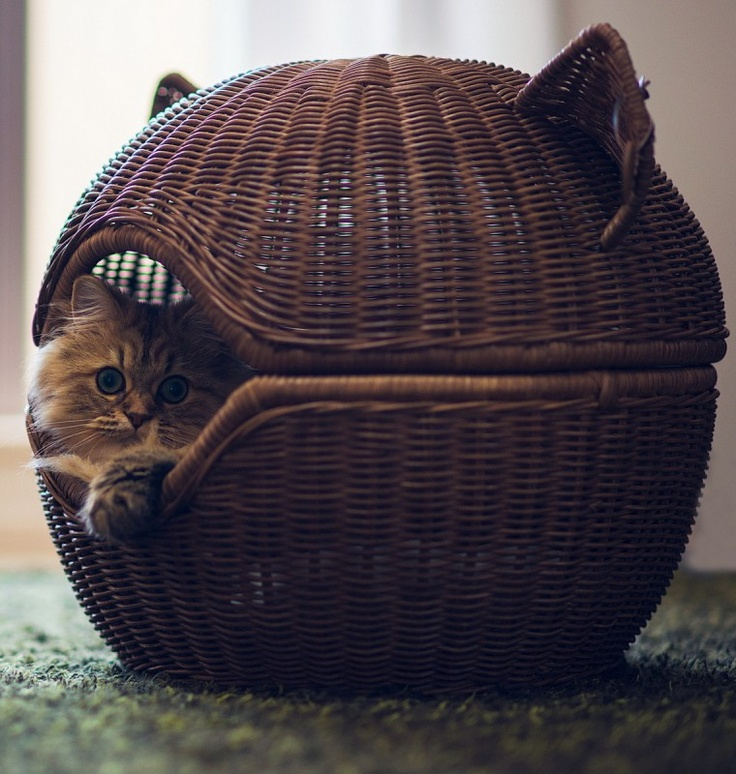 creative-and-cozy-cat-beds-18