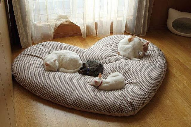 creative-and-cozy-cat-beds-21