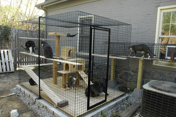 safe-and-smart-organized-outdoor-cat-areas-12