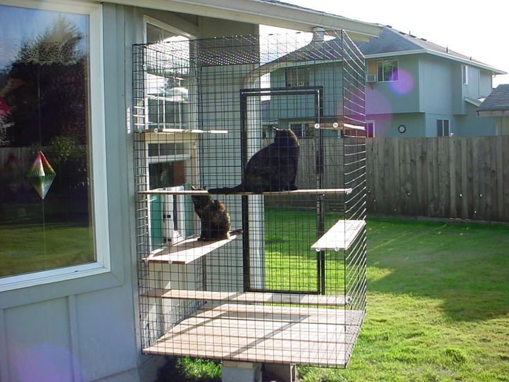 safe-and-smart-organized-outdoor-cat-areas-13