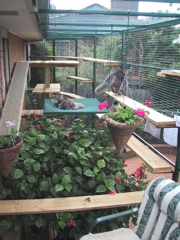 safe-and-smart-organized-outdoor-cat-areas-14