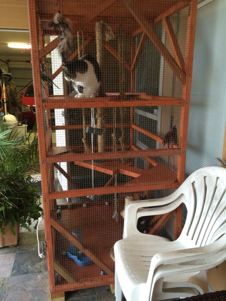safe-and-smart-organized-outdoor-cat-areas-24