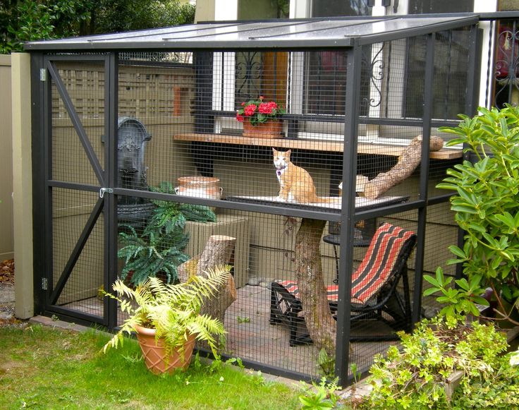 safe-and-smart-organized-outdoor-cat-areas-3