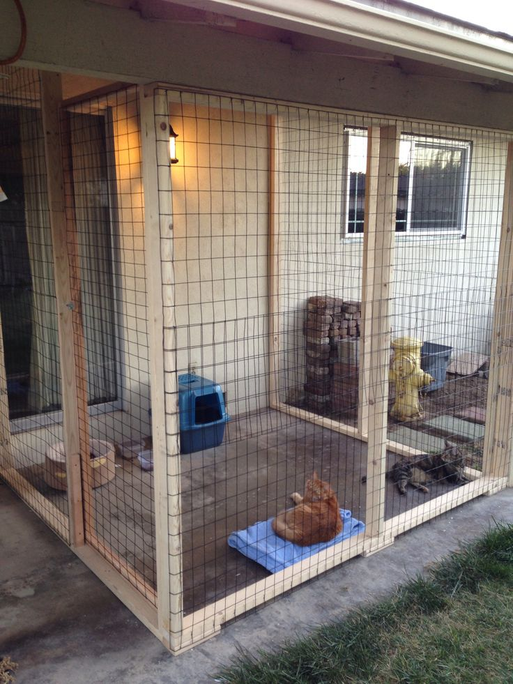 safe-and-smart-organized-outdoor-cat-areas-4