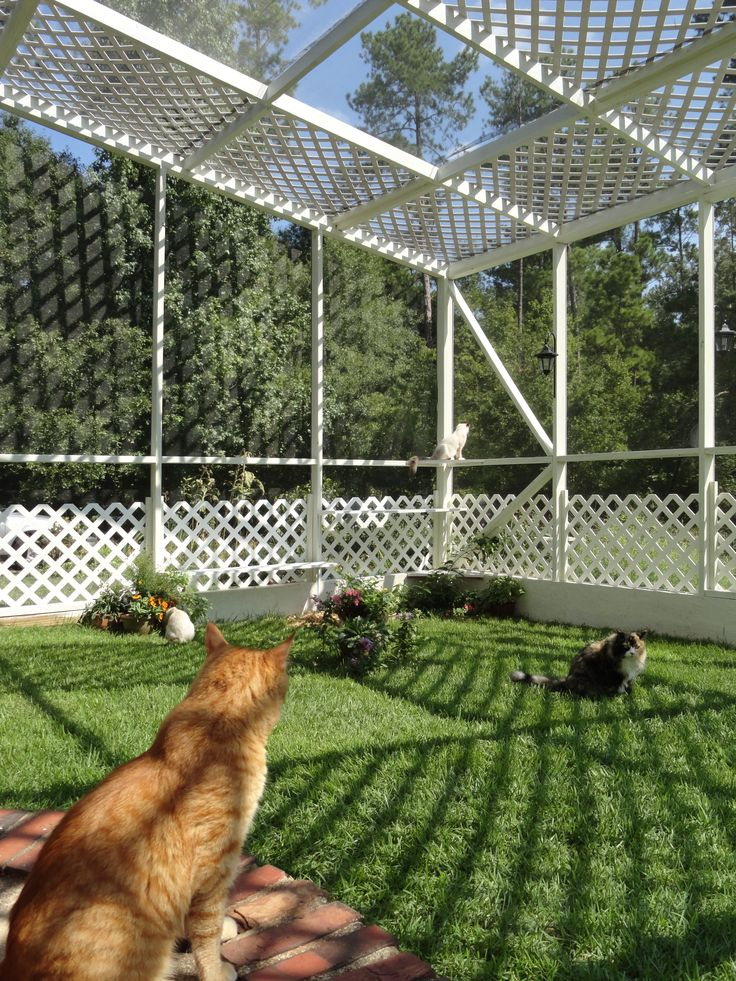 safe-and-smart-organized-outdoor-cat-areas-7