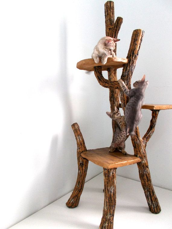 eco-friendly-driftwood-furniture-ideas-to-try-7