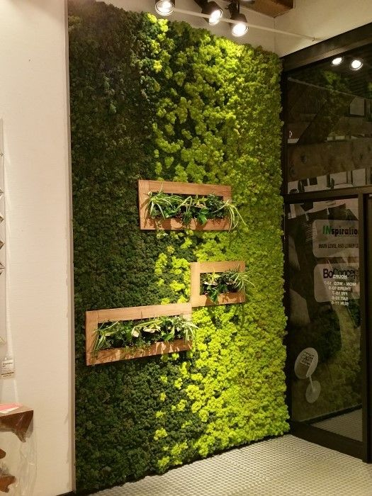peaceful-indoor-living-wall-designs-for-any-home-16