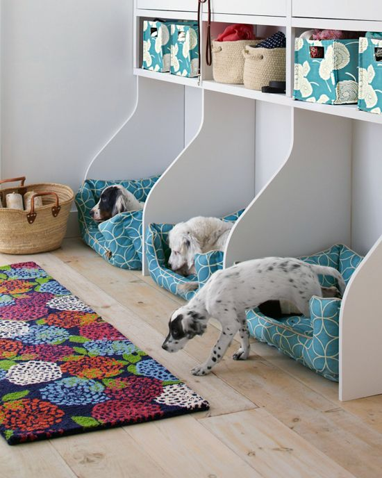 how-to-organize-all-your-pet-supplies-comfortably-ideas-2
