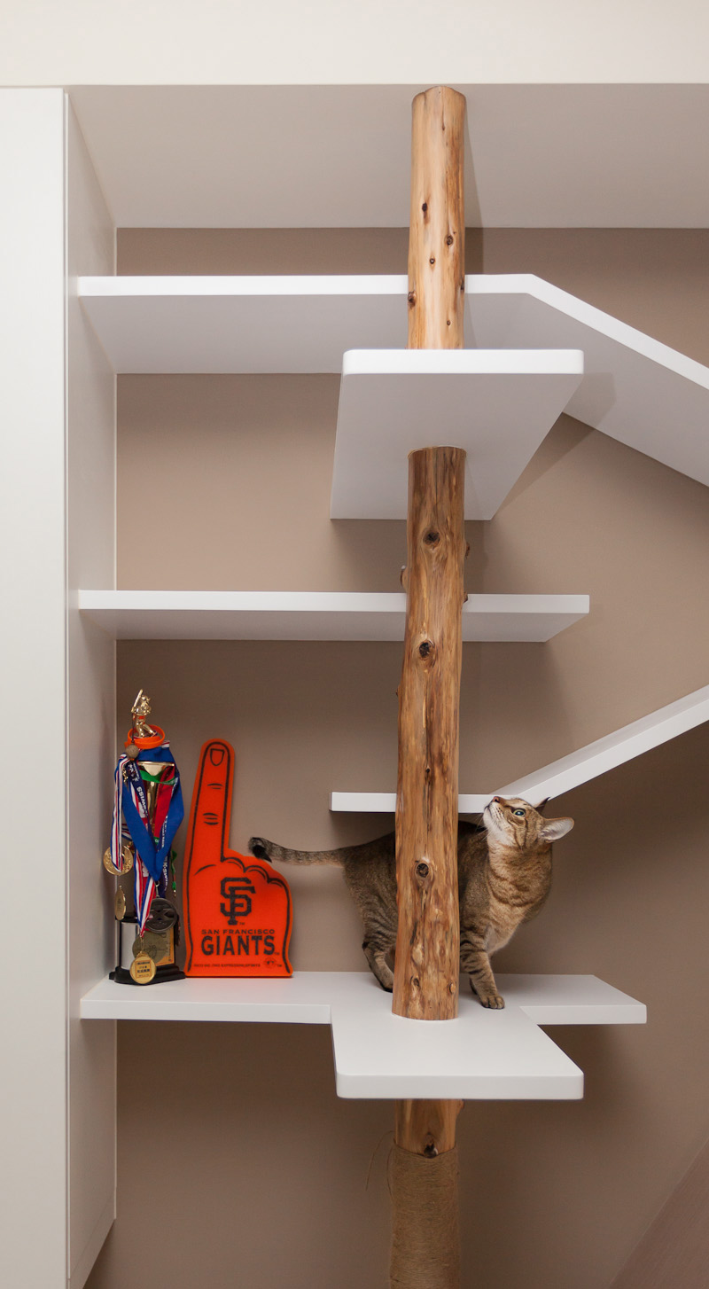 modern-custom-shelving-to-keep-the-cat-happy-5