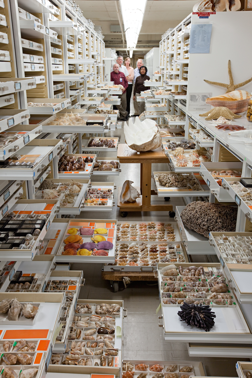 Invertebrate Zoology Collections, National Museum of Natural History