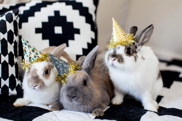 festive-rabbits-invited-for-a-modern-baby-shower