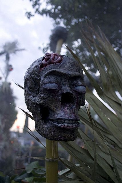 13-very-scary-and-realistic-zombie-skulls-for-tropics