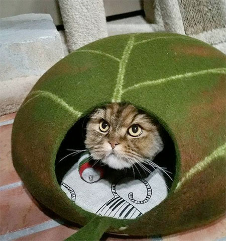 leafcatbed02