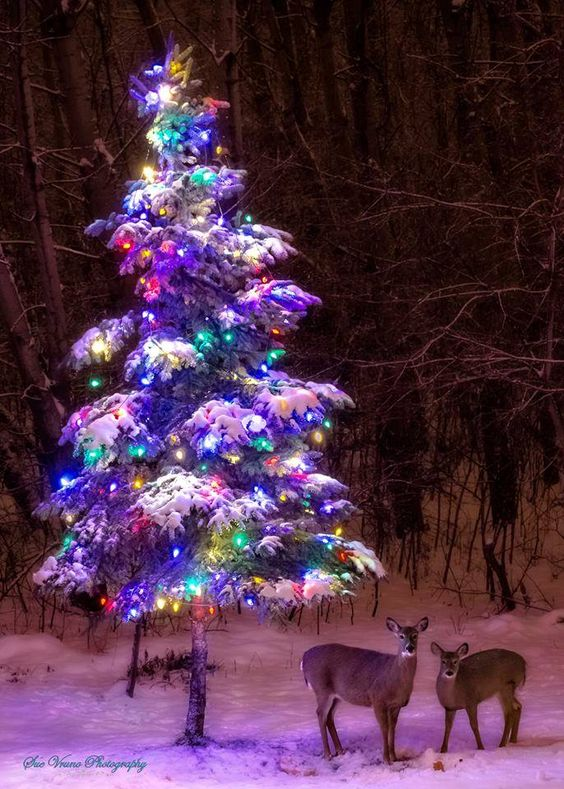 03-snowy-real-tree-decorated-with-bold-lights-and-a-couple-of-deer-next-to-it