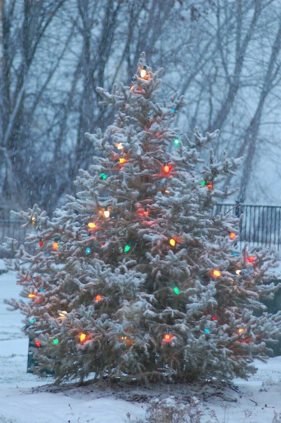 04-snowy-real-Christmas-tree-with-vintage-lights